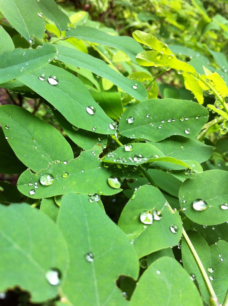 2013.06.27 軽井沢の梅雨- 草木