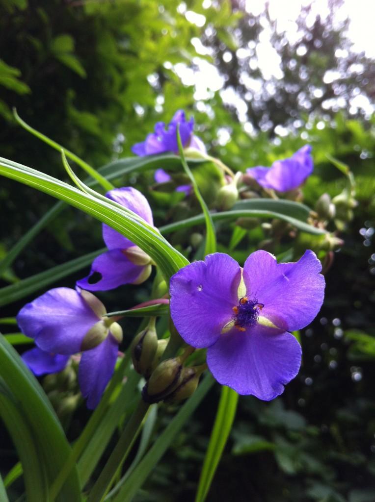 2013.06.29 追分の花や草木