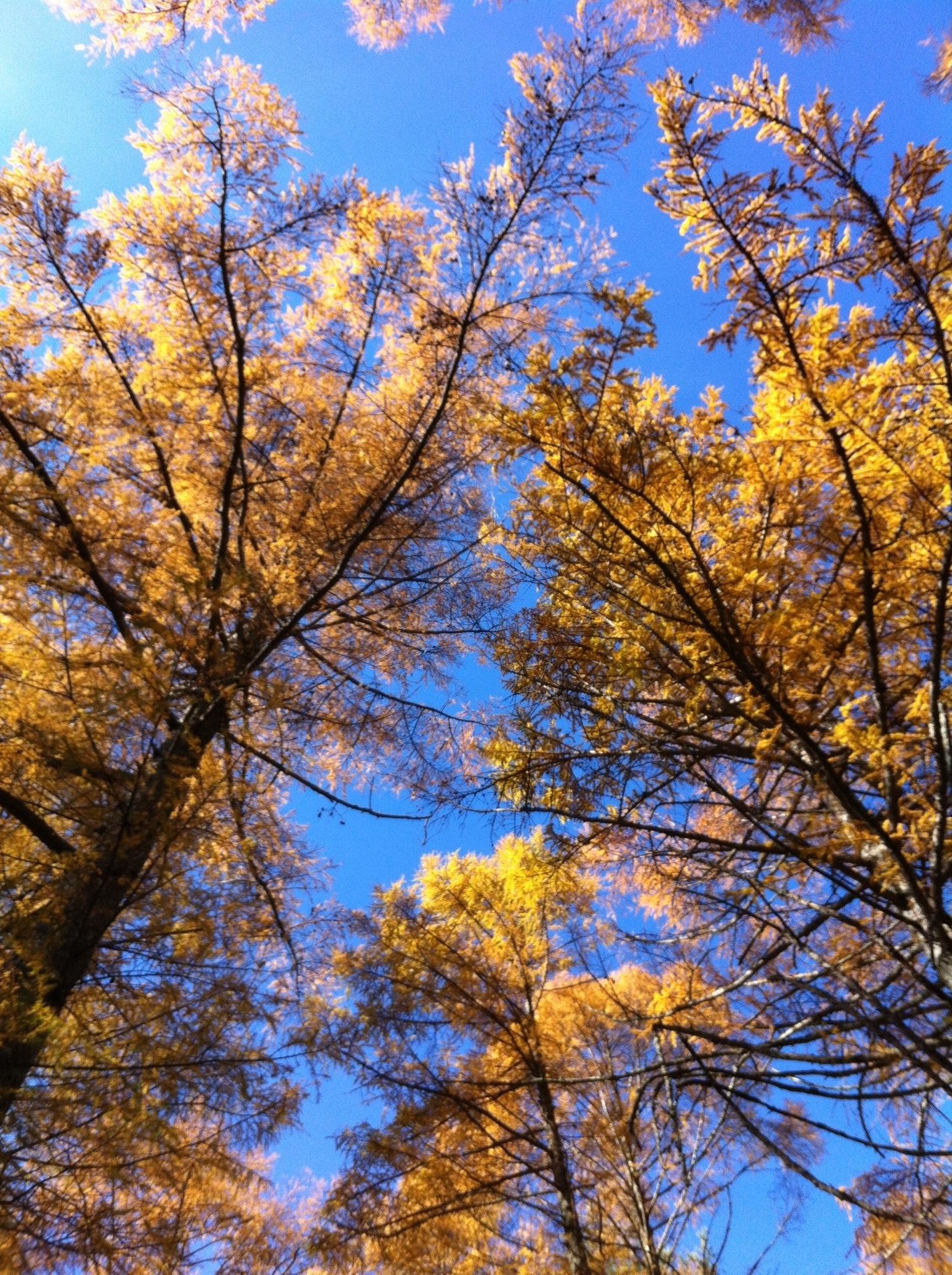 11月12日軽井沢の紅葉。20131112-105135.jpg