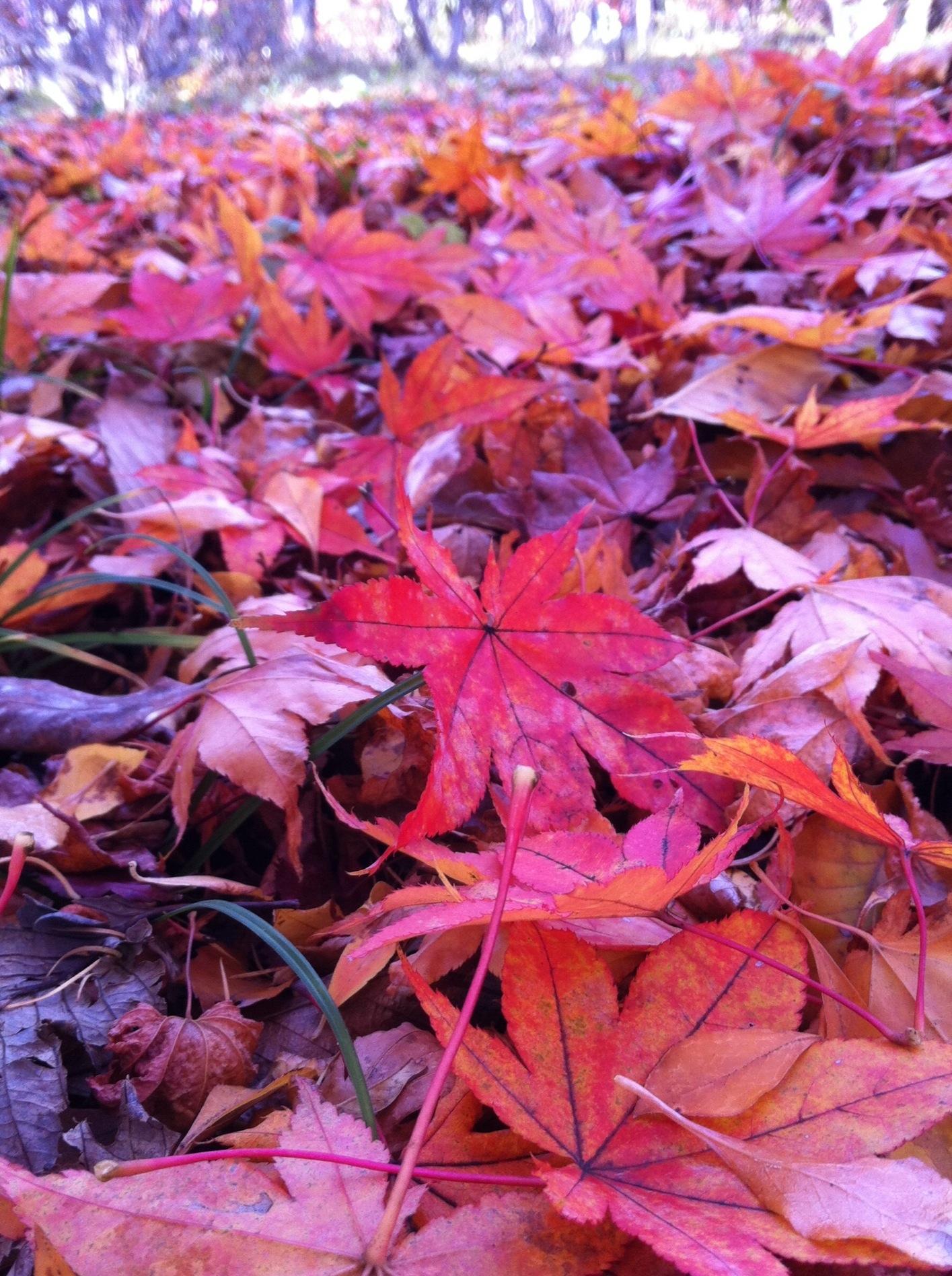 11月14日軽井沢の紅葉