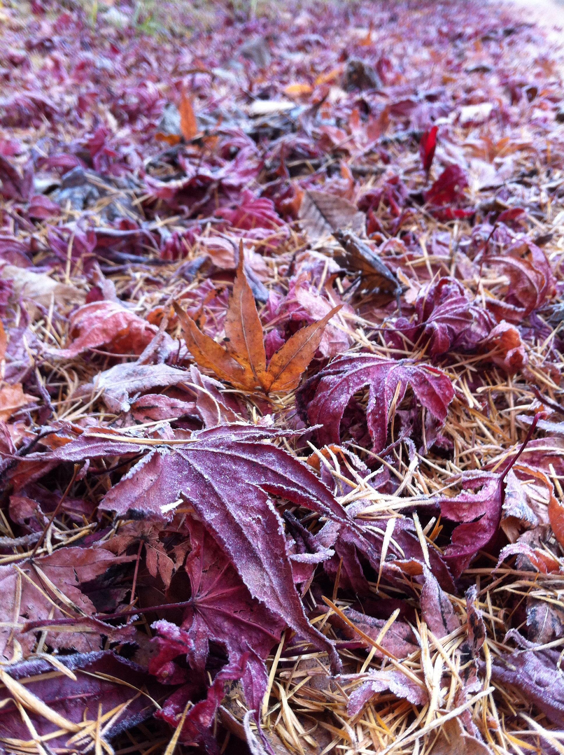 11月17日軽井沢の散歩道。20131117-093227.jpg