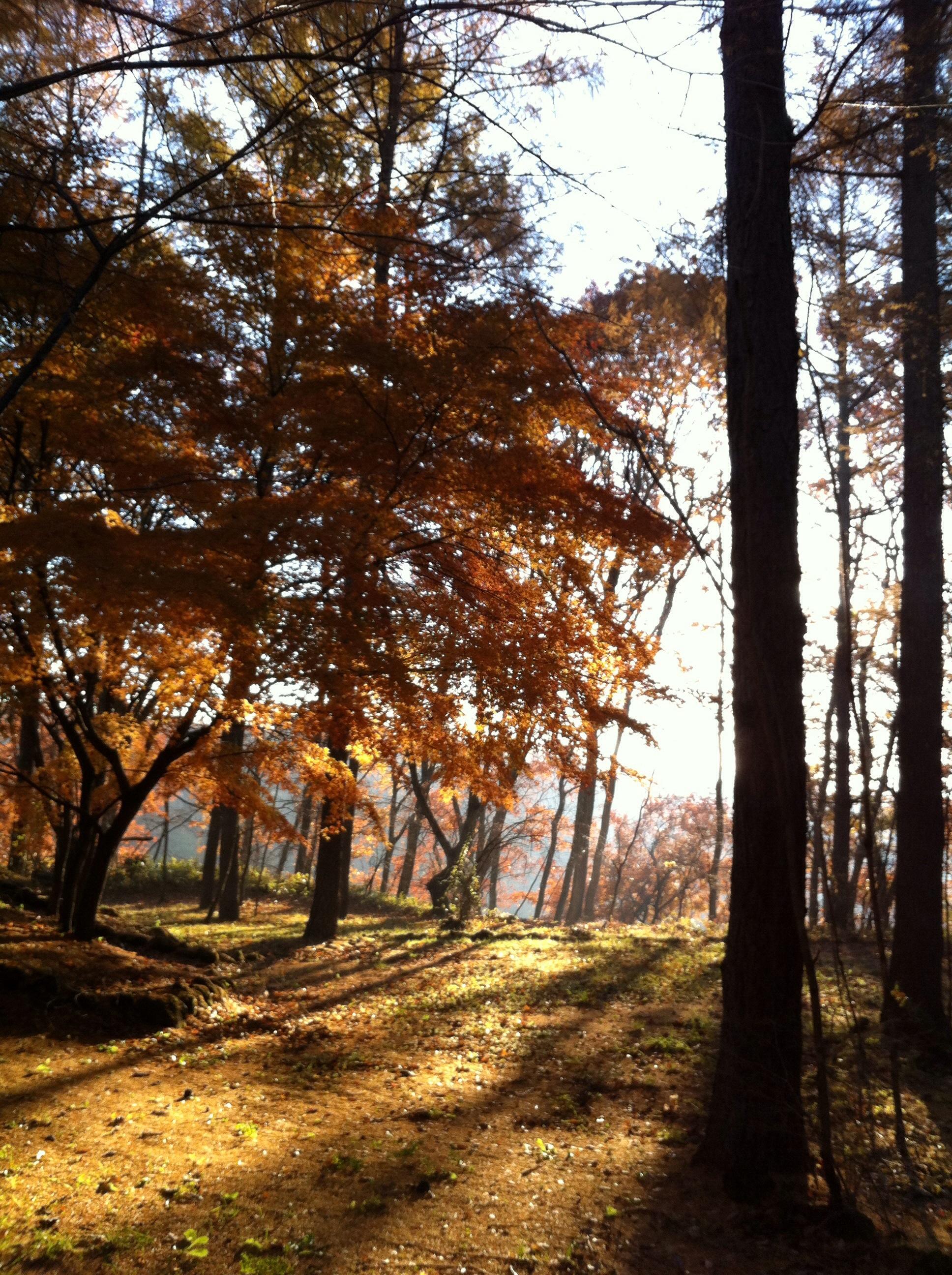 11月18日軽井沢の散歩道。20131118-091642.jpg