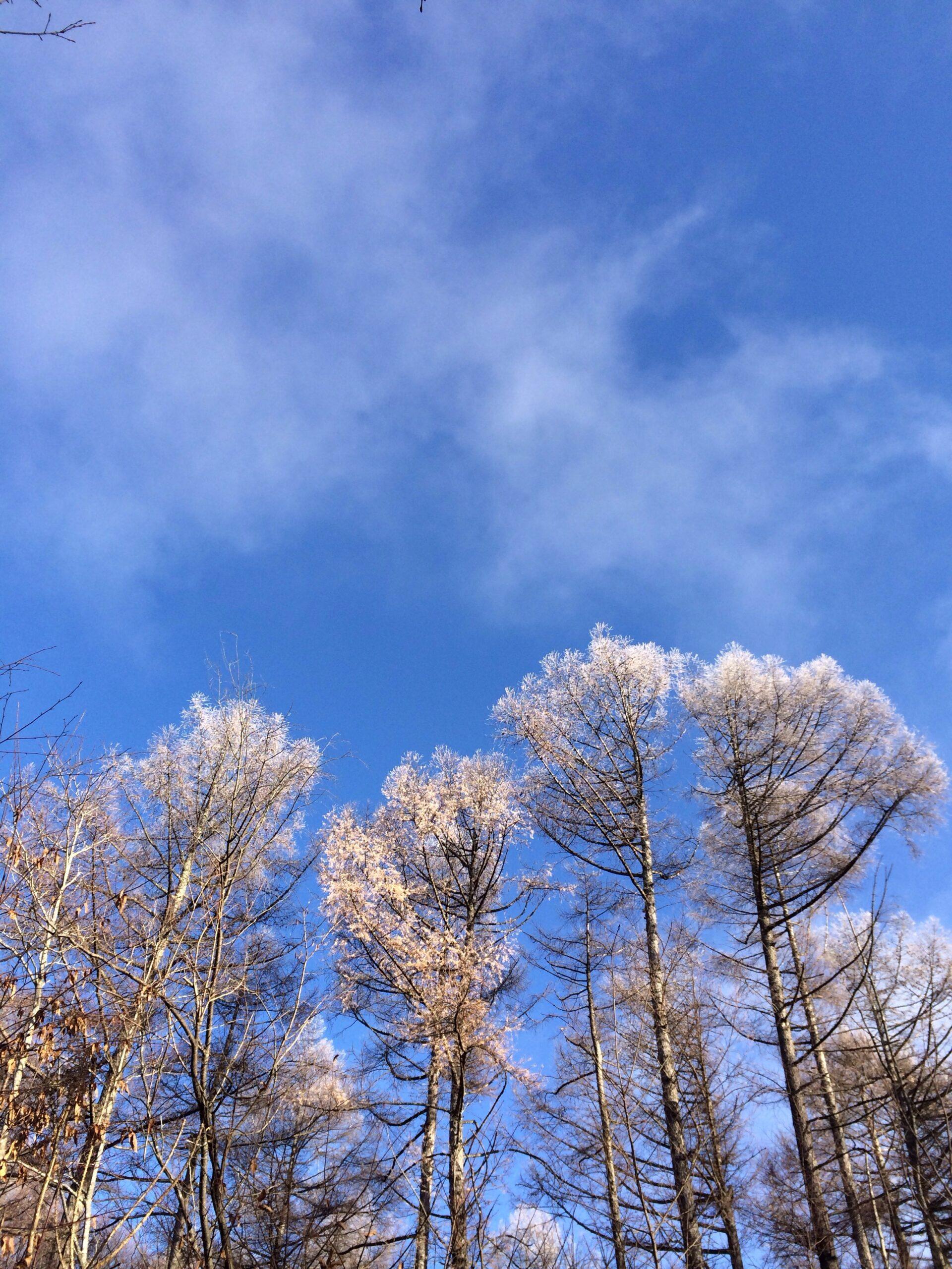 11月30日軽井沢の朝。