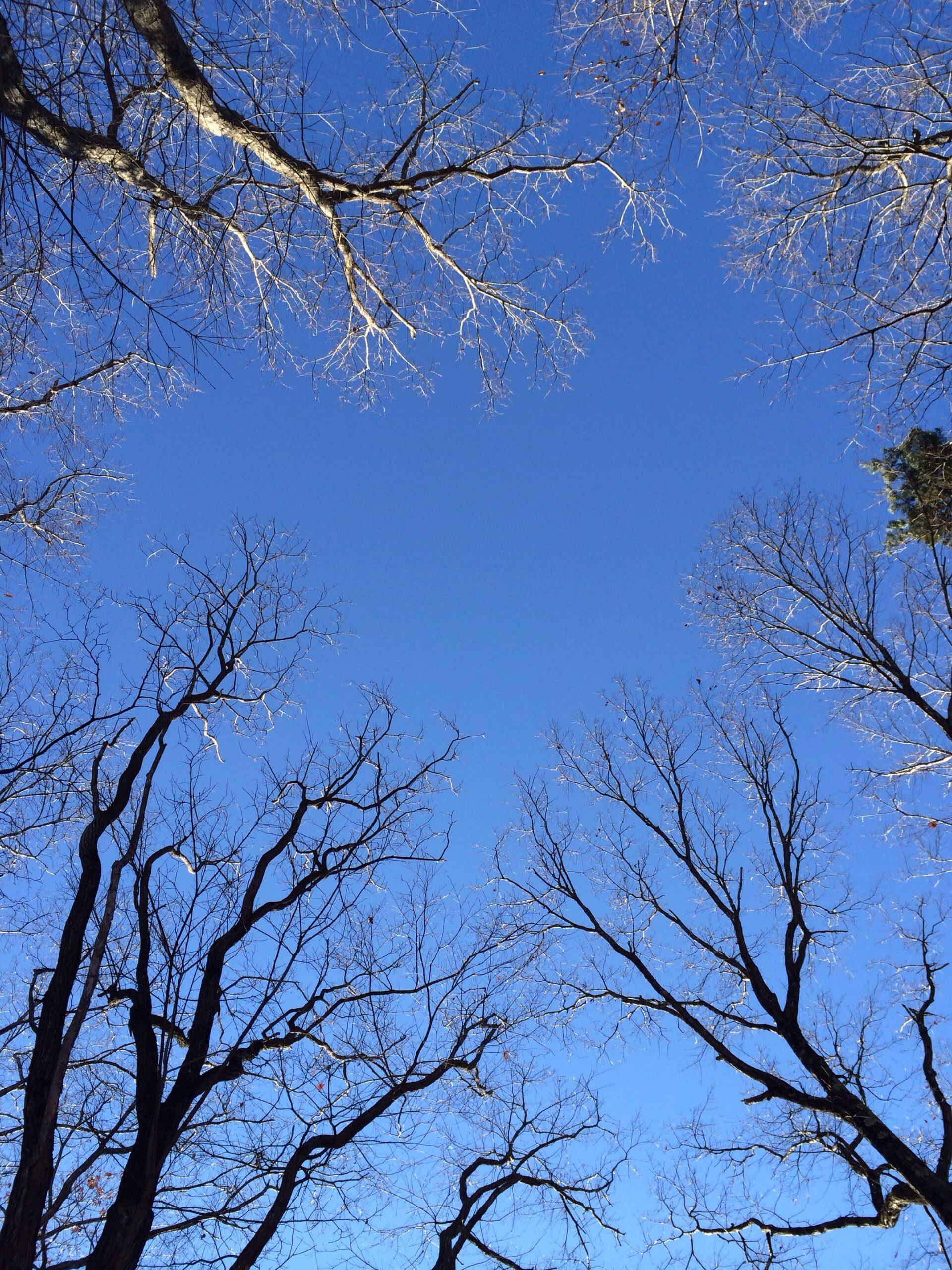 12月1日軽井沢の朝。