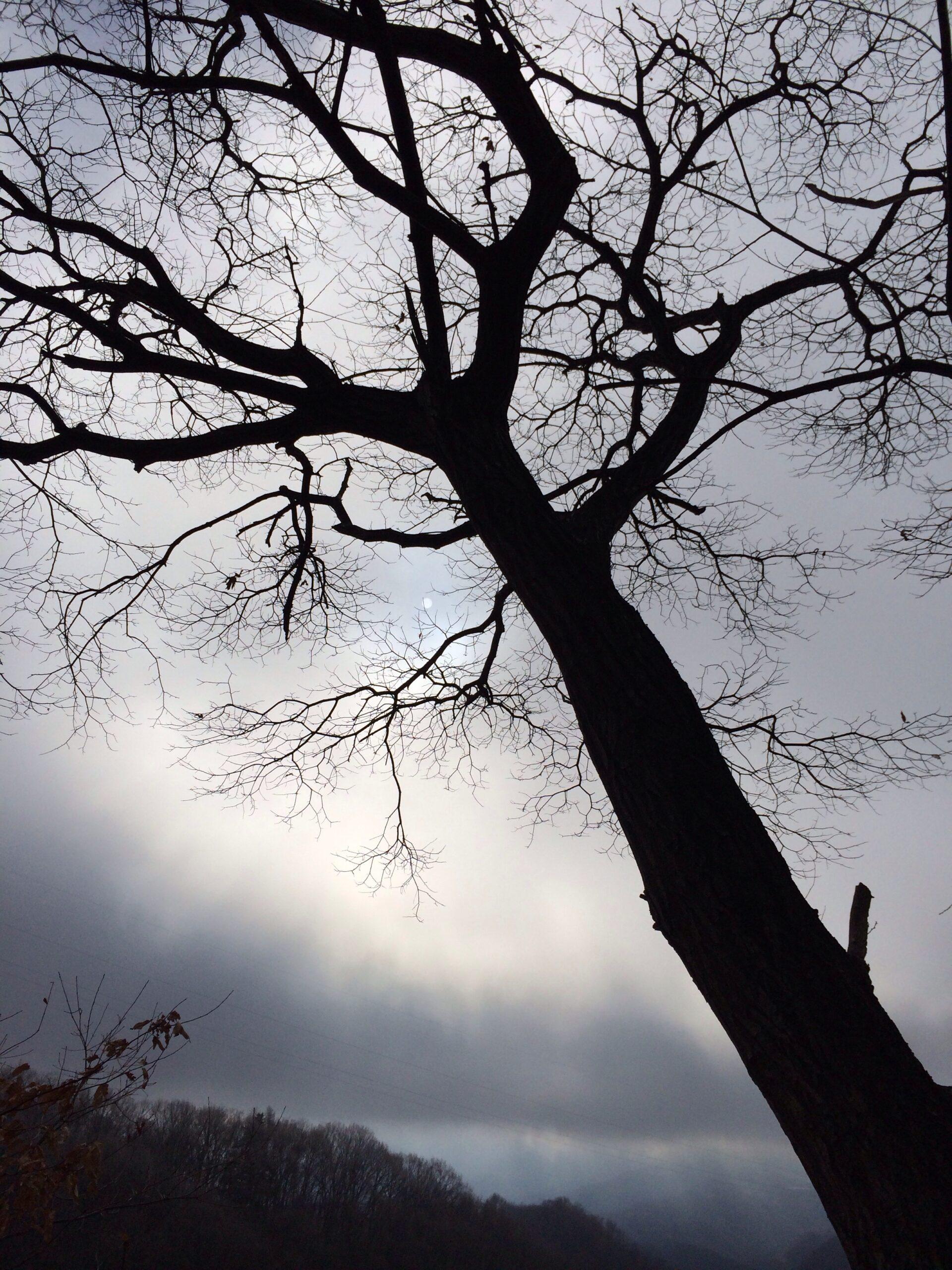 12月7日軽井沢、冬の木々