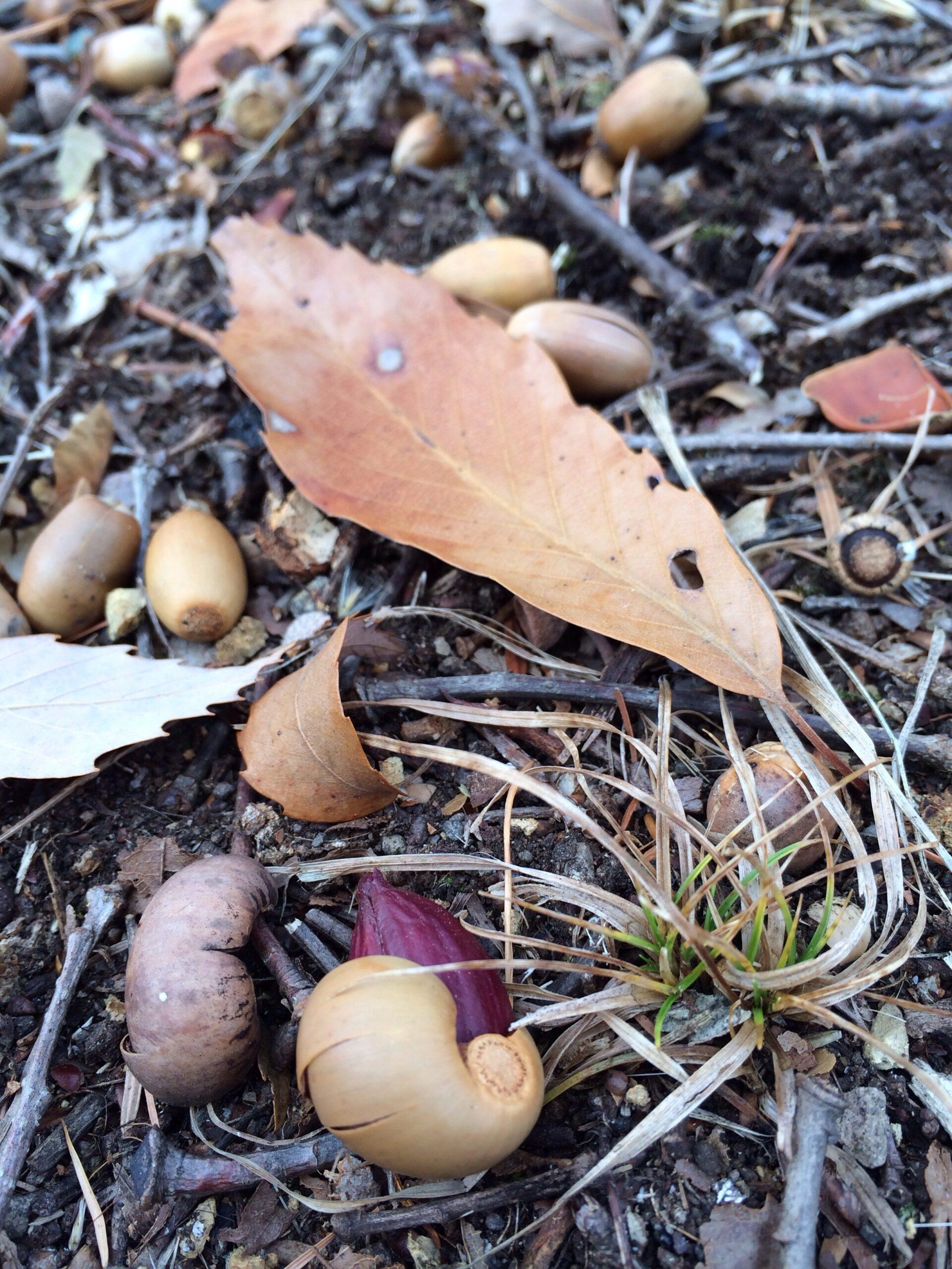 12月8日軽井沢冬の落ち葉