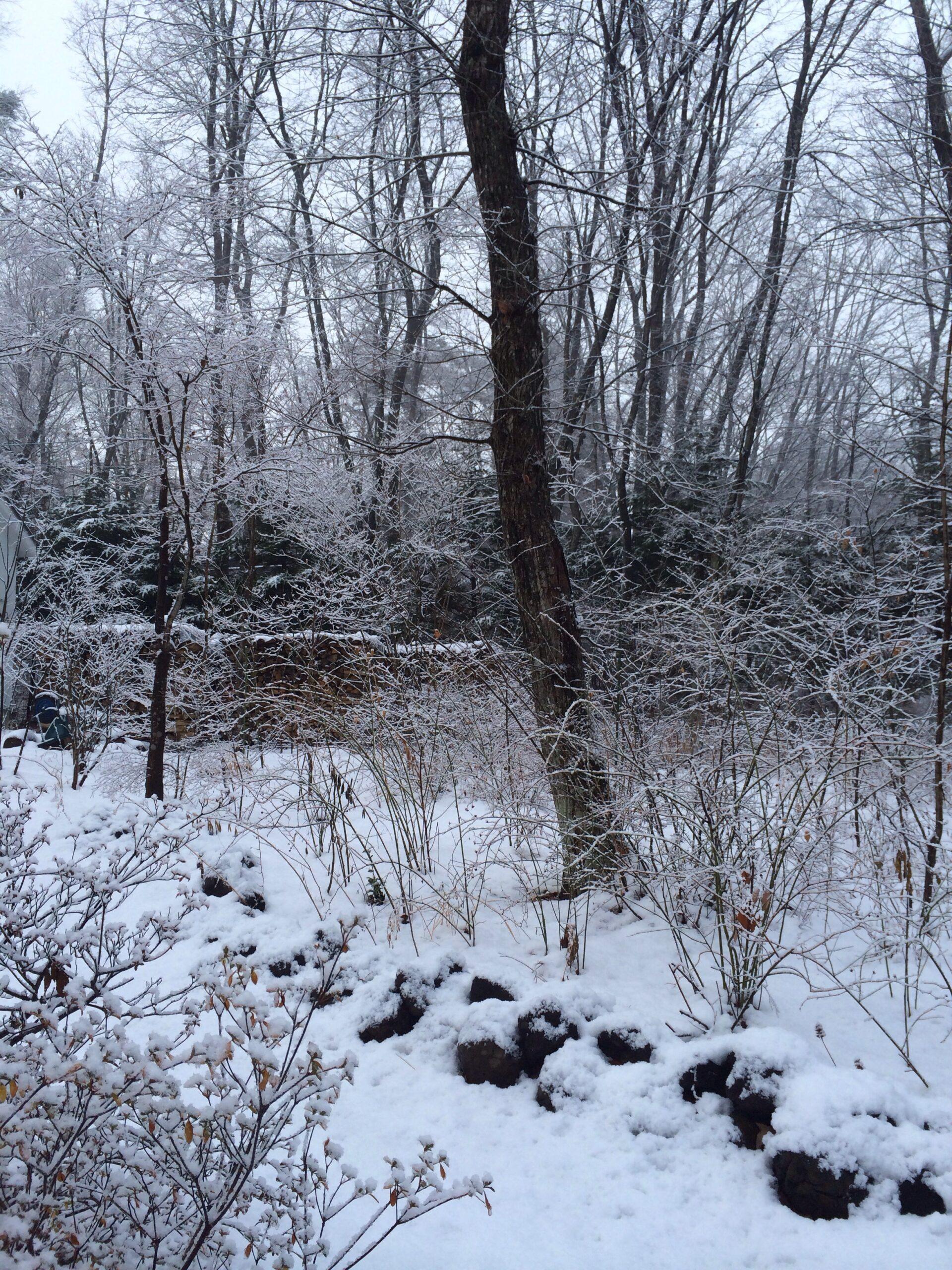 軽井沢の雪景色