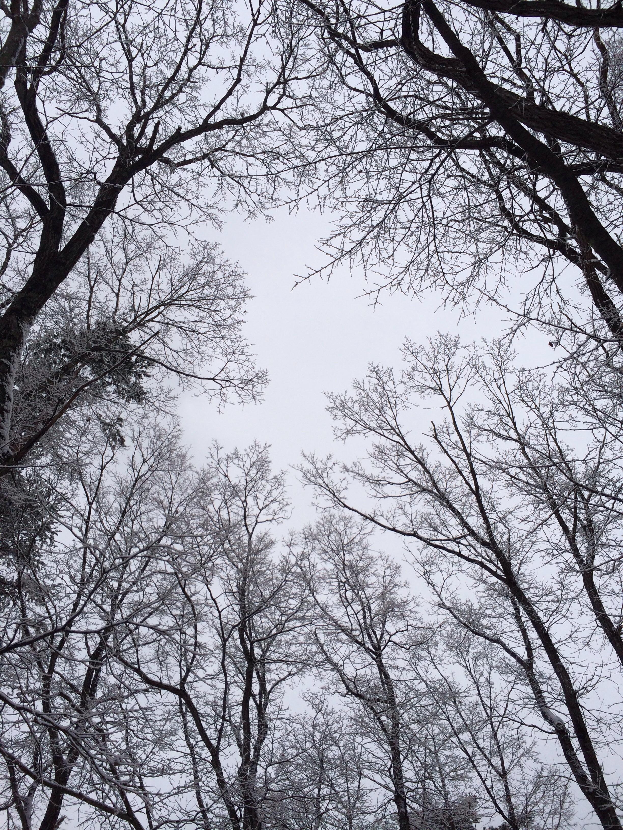 12月27日軽井沢の霧氷(むひょう)