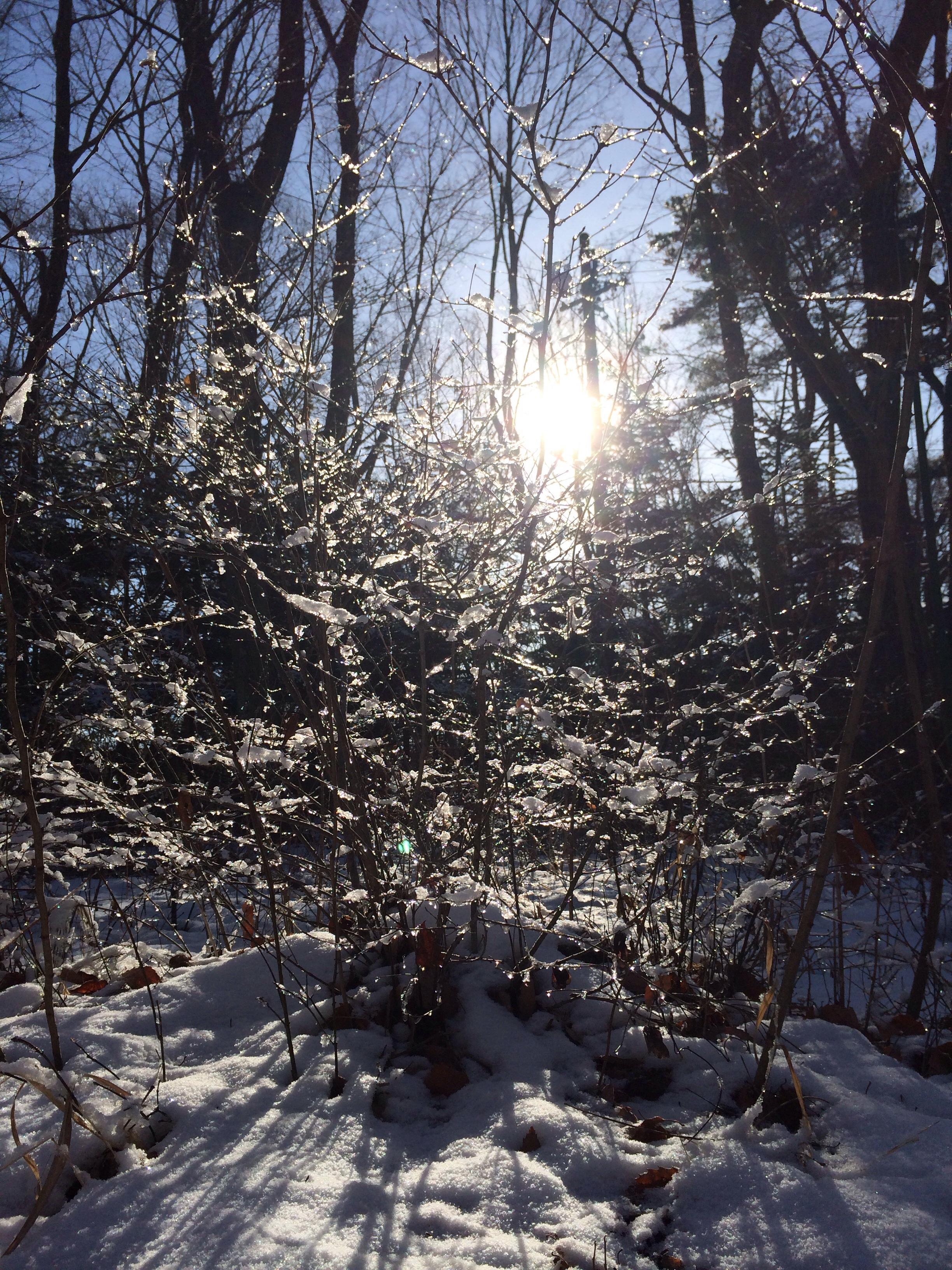 軽井沢の朝の雪がキラキラ